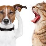Tratamento de Estresse em Cães e Gatos