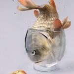 Estresse em peixes de cultivo
