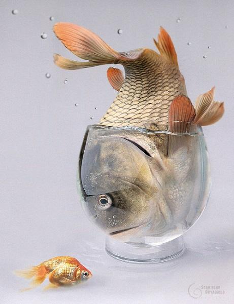 estresse-em-peixes-stress-em-peixe-estresse-piscicultura