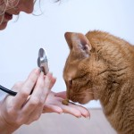 Giardíase em Gatos – O que é e como tratar