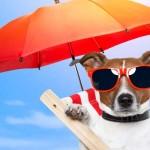 10 Cuidados nos dias quentes com os animais