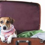 Quer levar seu pet na viagem? Veterinário dá dicas para você e seu amigo se saírem bem