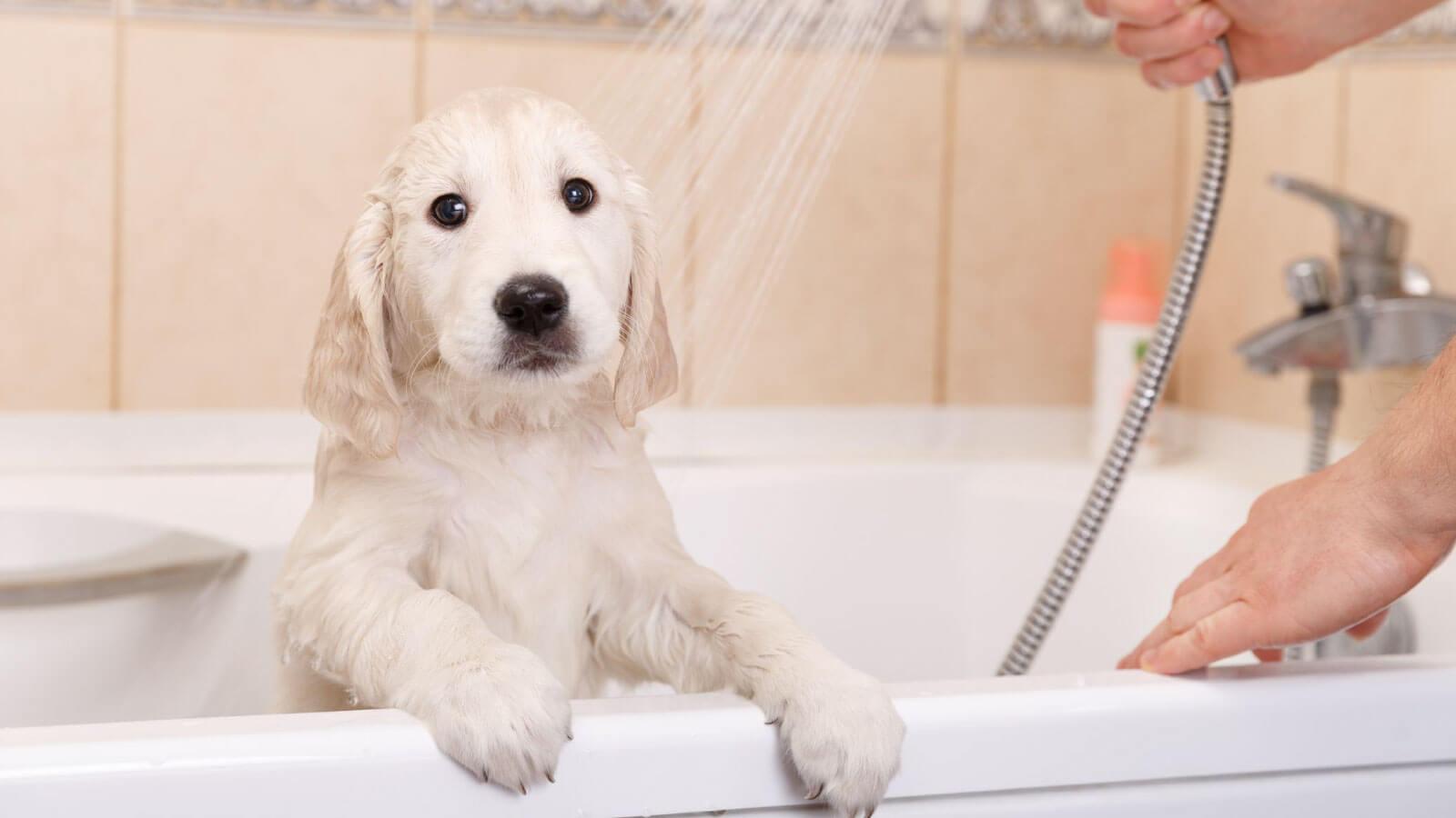 banho e tosa no calor
