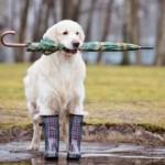 Período chuvoso requer atenção com os pets
