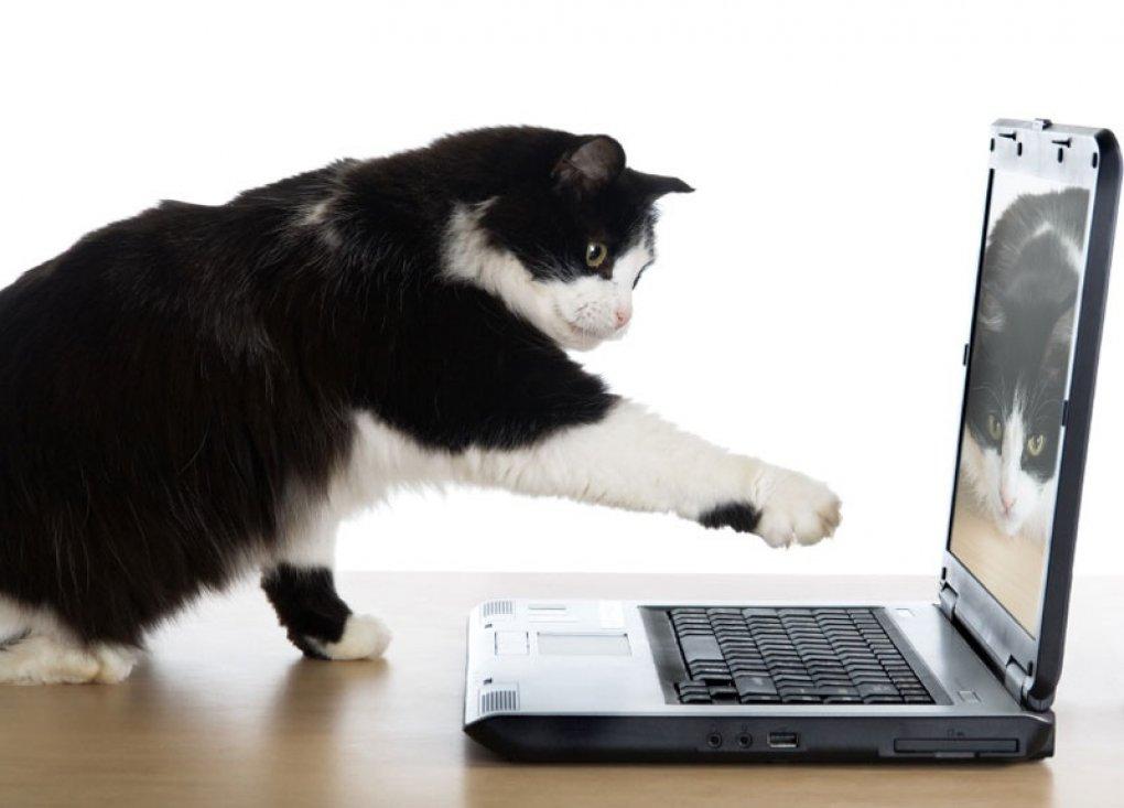 gato_computador_abrigo1
