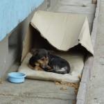 Como ajudar Animais Abandonados?