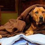 Como cuidar dos animais de estimação durante o frio?