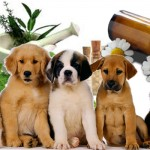 Homeopatia para Cães