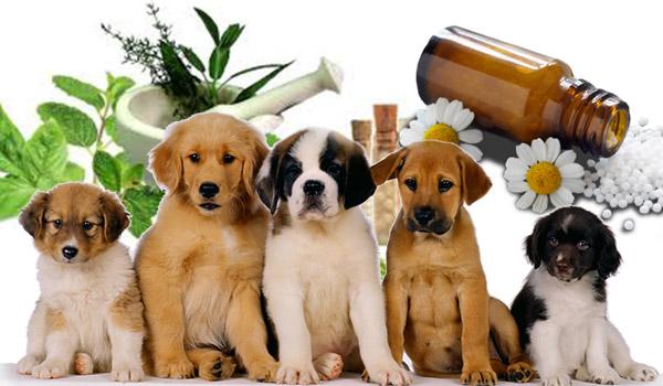 homeopatia animal