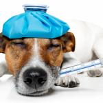 Como melhorar a imunidade do meu pet?