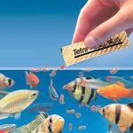 Saiba mais sobre a alimentação dos peixes