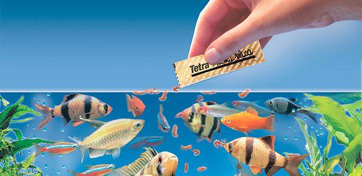 alimentacao-dos-peixes