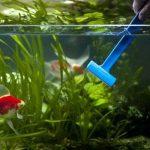 Saiba como cuidar do seu aquário