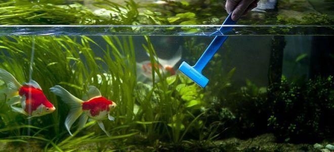 como-cuidar-do-seu-aquario