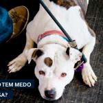 Medo de sair de casa: como ajudar o seu cãozinho?