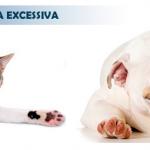 Lambedura Excessiva: entenda essa mania dos pets
