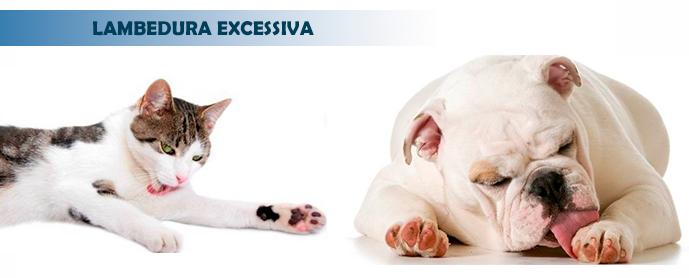 Lambedura-excessiva