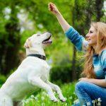 Adestrar seu cachorro: comandos básicos