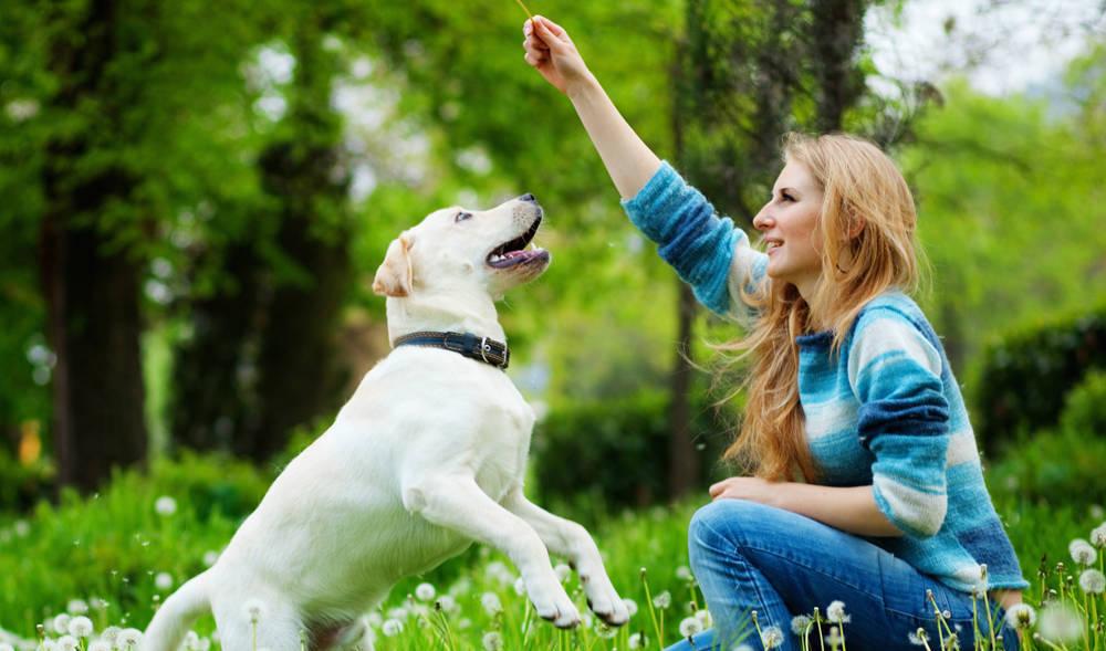 adestrar seu cachorro