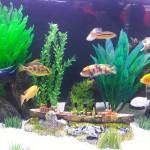 Agressividade entre os peixes: Como reduzi-la