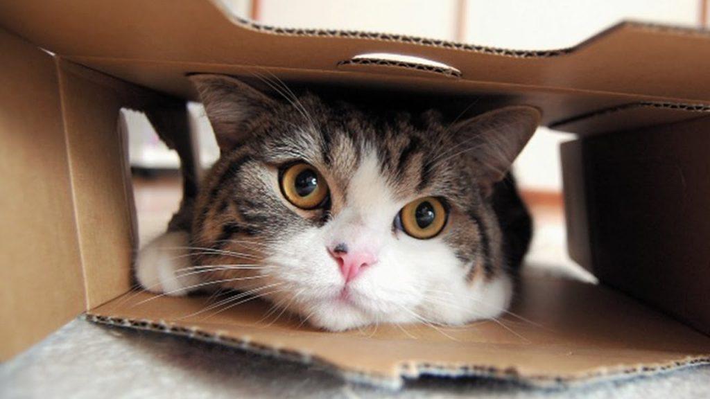 Curiosidade de gatos