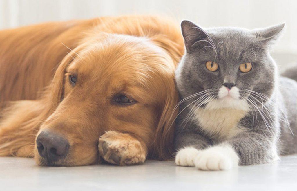 Homeopatia para pets