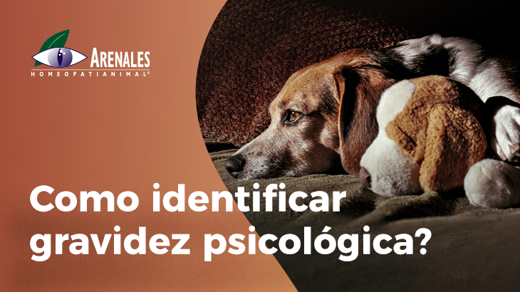 gravidez psicológica em cadelas e gatas